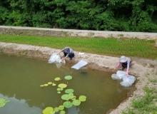 [영덕]친환경 논 큰 징거미 새우 생태양식 농가 보급